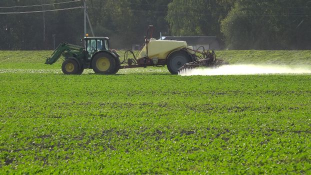 Tractor spray rape seed field with pesticide chemicals in autumn. Farmer with modern vehicle kill pests in agriculture field before winter.