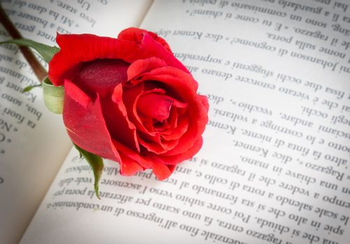 detail of red rose on the open book, love concept