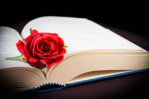 detail of red rose on the open book on old wood background