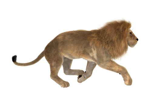 3D digital render of a male lion running isolated on white background