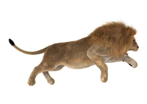 3D digital render of a male lion hunting isolated on white background