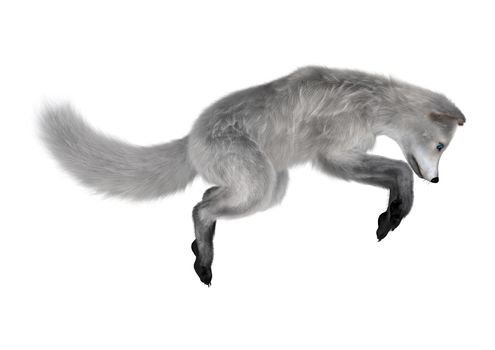 3D digital render of an arctic fox jumping isolated on white background