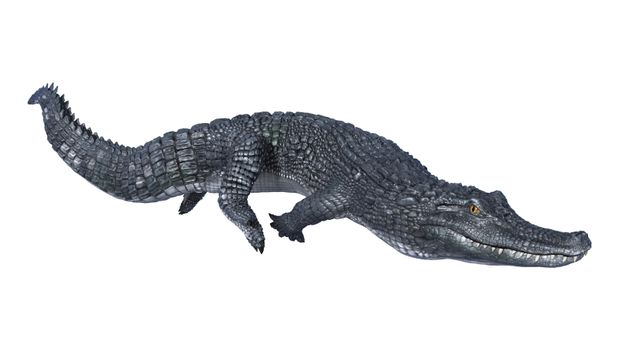 3D digital render of an alligator caiman isolated on white background