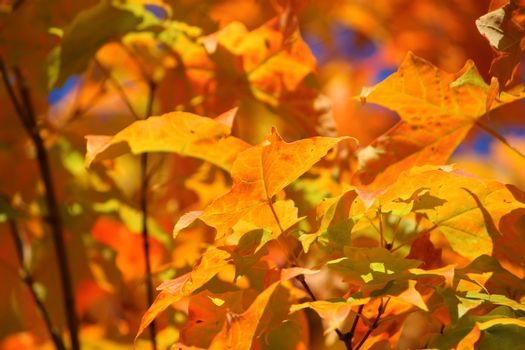 Colours Of The Fall.