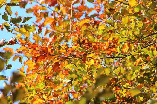 Beautiful Autumn Colours.