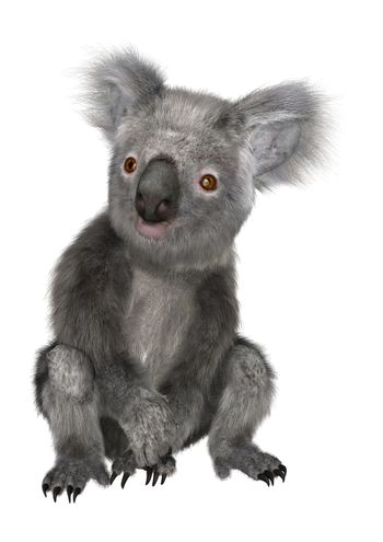 3D digital render of a cute koala sitting isolated on white background