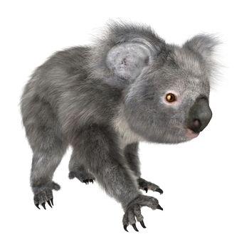 3D digital render of a cute koala walking isolated on white background