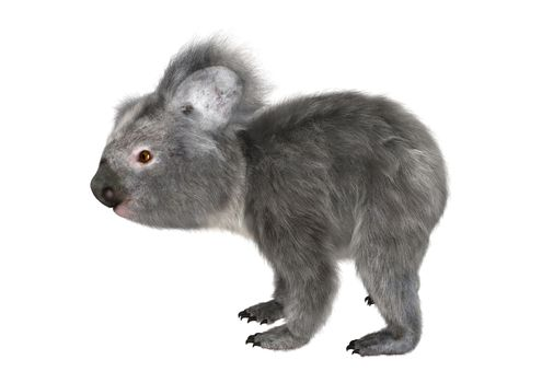 3D digital render of a cute koala isolated on white background