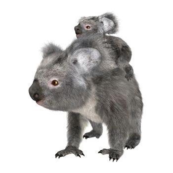 3D digital render of a cute Australian koala bear carrying baby isolated on white background