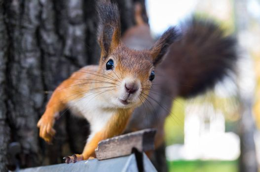 The photograph shows a squirrel