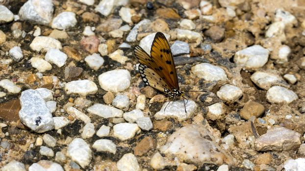 a pair of butterflies perching on a rock
