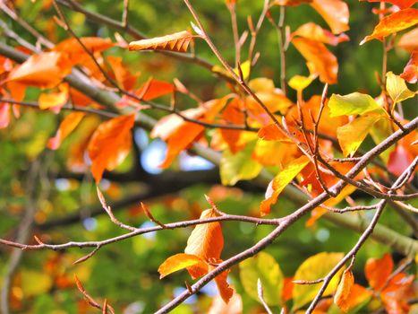 Colourful Autumn Leaves.