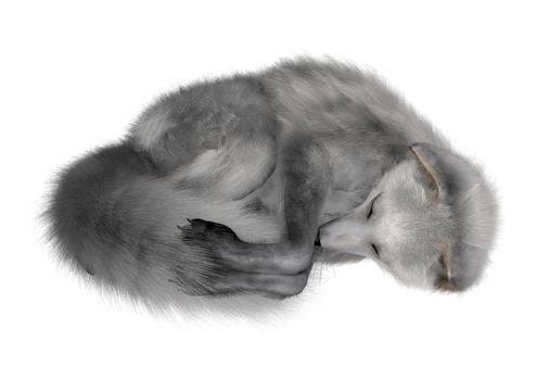 3D digital render of an arctic fox sleeping isolated on white background