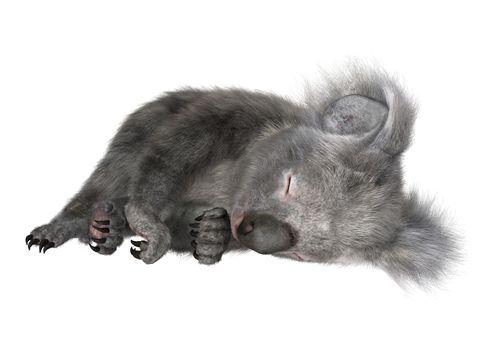 3D digital render of a cute Australian koala bear sleeping isolated on white background