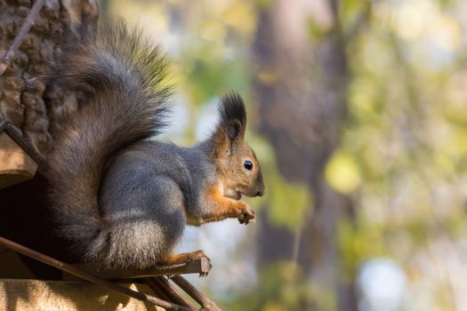 The photograph shows a squirrel on the tree