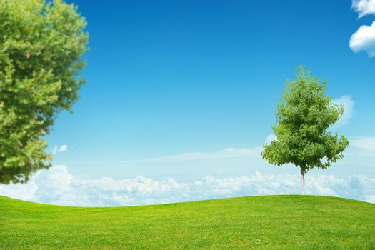 Landscape with green trees and blue sky