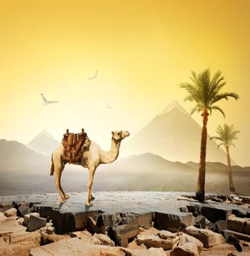 Camel and birds