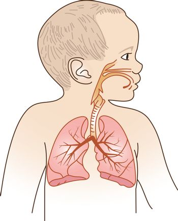 Vector Illustration of a Child Respiratory System Organs