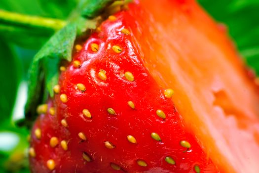 Cut a ripe strawberry to the major plan.