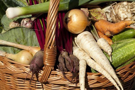 vegetables' different species in basket in garden