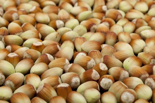 fresh hazelnut in nutshell as background