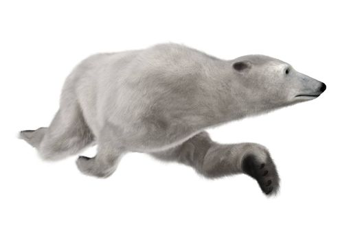 3D digital render of a polar bear swimming isolated on white background