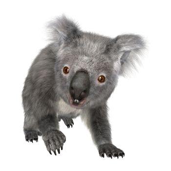 3D digital render of a cute Australian koala bear isolated on white background