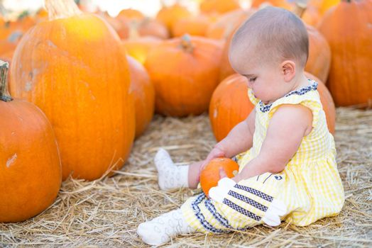 Adorable Baby girl Playing with a pumpkin in a pumpkin patch