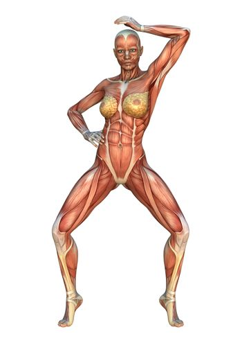 3D digital render of a female figure with muscle maps isolated on white background