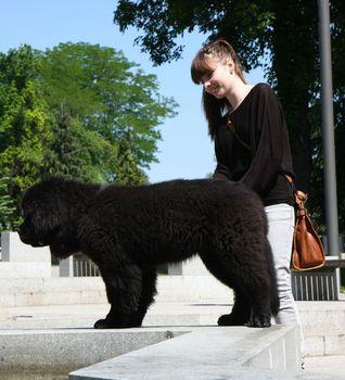 Cute Newfoundlander puppy with girl in public park