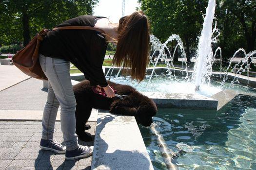 Newfoundlander puppy drinking water in public fountain