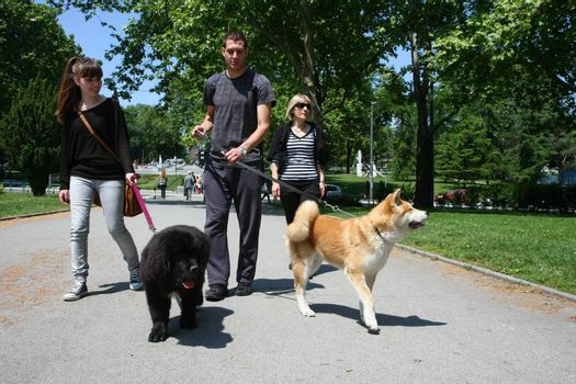 Young man, girl and lady walking  puppies of Akita and Newfoundlander in public park