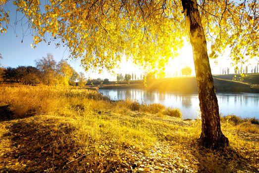 Bright autumn at sunrise