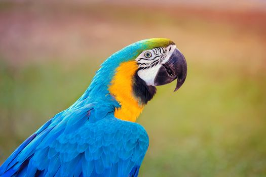A beautiful parrot with bright blue plumage on the background la