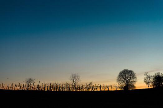 Vineyard horizon