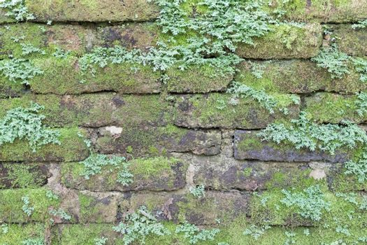 Moss growing on stone wall