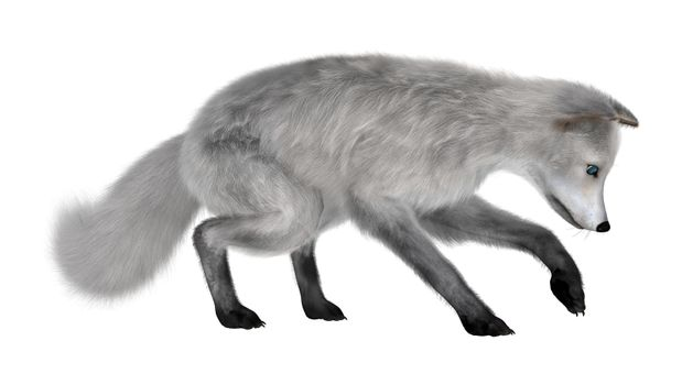 3D digital render of an arctic fox isolated on white background