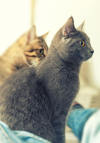 Two cats profile