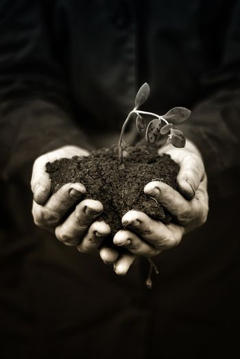 Dead plant in hands of agricultural worker