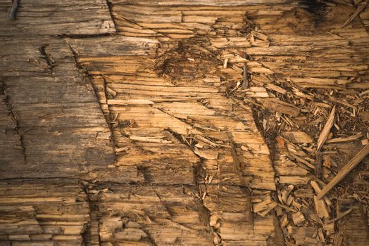 Chopped Wooden Plank Texture