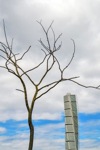 MALMO, SWEDEN - JUNE 26: Malmo Turning Torso Building as Famous Landmark in this Swedish Townscape and Tree with Bare Branches on Sunny Day