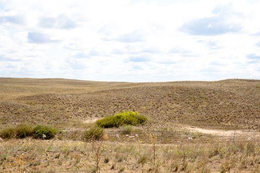 Summer steppe landscape