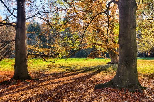 The leafy forest in the morning sunshine