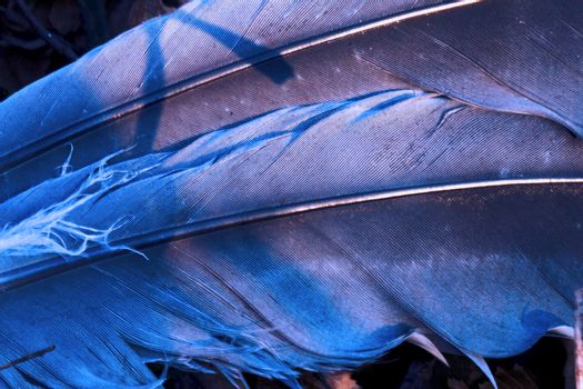 crow plumage blue and abstract