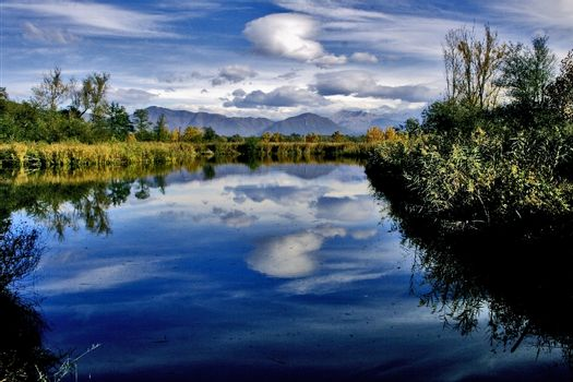 marsh moor