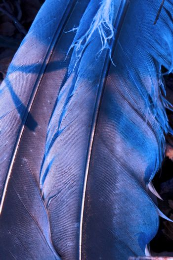 plumage blue and abstract