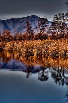abstract  and marsh moor