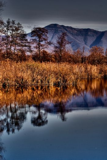 abstract  and marsh