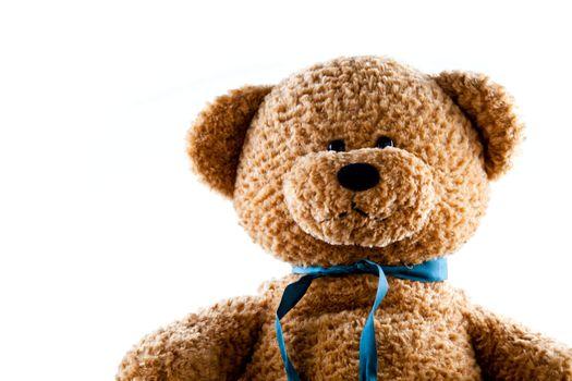 Teddy Bear On The Rise