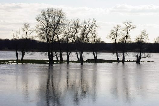 The flooded meadow landscape of the Elbe in the backlight with sparkling water and trees which reflect in the water.
